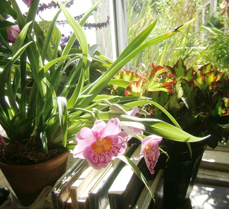 Orchid and Books, Window